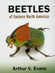 BeetlesEasternUS